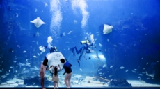 한화 아쿠아플라넷 일산 개관 5주년 기념 이벤트 진행
