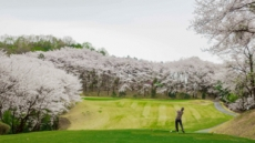 한화리조트 플라자CC 용인, 벚꽃 인증샷 이벤트