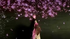 트릭아이뮤지엄 '홍대 벚꽃', 봄철 이색 관광명소로 각광
