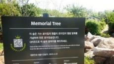 강남구청 '로이킴숲'철거했다고 했지만, 결국 '반쪽 철거'