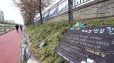 마약 투약 혐의 '박유천 벚꽃길'…주민들 철거 요구 논란