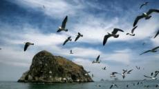 114개의 섬…2만마리 갈매기의 천국…희귀 목련 가득한 '서해의 보물' 태안