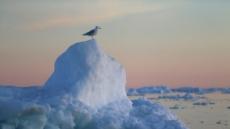 """""""그린란드 빙하, 1980년대보다 6배 빨리 녹아"""""""