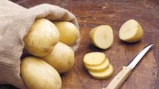 생강·자줏빛 감자도 암 예방 식품