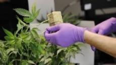 美 일리노이, 마리화나 합법화…80만명 범죄기록 말소 '논란'