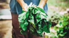 [aT와 함께하는 글로벌푸드 리포트] 웰빙테마 공략…네덜란드, 유기농식품 성장세