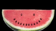 수박껍질, 혈관이완·근육통 완화… 수박씨는 체지방 축적 억제 효과