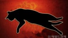 노점상 겁주려 고양이 산채로 식육…엽기 동영상에 印尼 '발칵'
