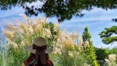 무더위 속 가을 정취 물씬…'팜파스축제' 15일부터 태안 청산수목원서
