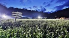 켄싱턴호텔 청평-가평-지리산 하동,  꽃축제 연계 가을여행 패키지 3종 출시