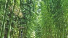 [테마별 농촌 가을여행 - 본지·농림축산식품부·한국농어촌공사 공동기획] 눈호강에 입호강까지…'구곡순담' 장수비결에 매료되다