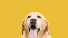 마약탐지견, 犬생2막을 찾아서···관세국경관리연수원, 은퇴 마약탐지견 무상분양 실시
