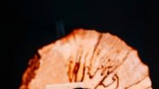 [헤럴드pic] 헤럴드디자인포럼…강연하는 마리아 리소고르스카야