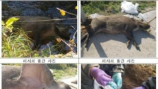 정부, 오늘부터 접경지역 멧돼지 포획…민관군 합동포획팀 투입