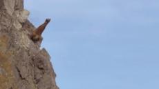 바다코끼리는 왜 80m 높이 벼랑을 오를까