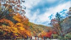 '도깨비' '호텔델루나' 촬영지…가을의 화려함에 빠지다