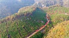 영암국유림관리소 편백나무조림지, 산림청 최우수 조림지 선정