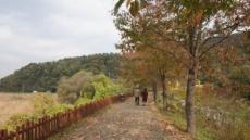 가을은 아직 떠나지 않았다…당일치기로 즐기는 '경기도 광주'의 늦가을