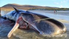 환경오염의 경고…죽은 고래 뱃속에  '쓰레기 100㎏'