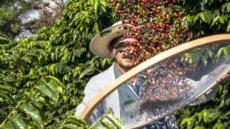 [리얼푸드] '윤리적 소비' 트렌드로 뜬 공정무역...커피 생산에 미치는 영향