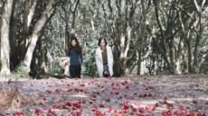 청자의 고향, 동백 꽃대궐…강진·고흥·울진의 '힐링 매력'이 내게로…