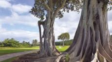 [백상현의 세계 100대 골프 여행 - 하와이의 낙원 터틀베이]눈부신 해변의 파도·연못·야생습지…'미국 100대 퍼블릭' 파머 코스 독창적