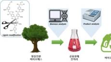 목질계 바이오매스 활용…고효율 바이오연료 생산공정 개발