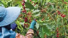 가치·윤리중시 'MZ세대' '공정무역 커피'를 마신다