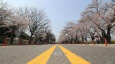 이번 주말도 여의도 벚꽃길 통제