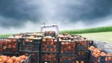 [aT와 함께하는 글로벌푸드 리포트]카자흐스탄 '식량안보·농산물 가격안정' 팔 걷어