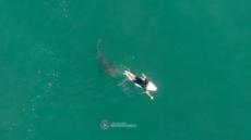 """올해 호주서 상어 공격으로 7명 사망, 86년만에 최다…""""지구온난화 때문"""""""