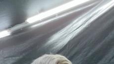 '한계를 뛰어 넘게 한다' 방탄소년단 지민 '필터' 무대, 세계적 안무가 니키앤더슨 극찬