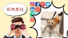 """""""SNS로 보고 있다!""""…안내견 거부 '신고 포상제' 청와대 청원 등장!"""