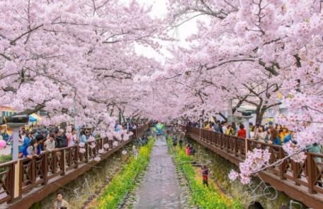 '일제 잔재'라 벚꽃축제→봄꽃축제로?…홍문표, 과거 친일파 재산 환수법 반대는?