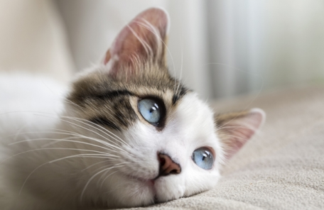 [리얼푸드] 고양이에게 생선… 옛날 소리