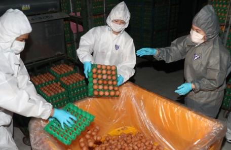 """농식품부 """"420개 농장 계란 살충제 성분 보완 조사"""""""