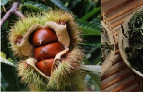 충청남도, '충남 6차산업'으로 음식 안전불감증 해소