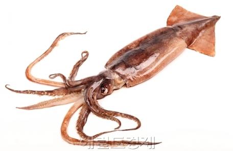 어획량 급감에 중국산 오징어 급증…수입액 전년比 117%↑