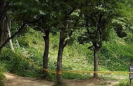 서울대공원 인근 수풀서 발견된 토막시신 신원 확인