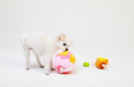 워너펫 '워너볼', 분리불안 강아지에게 효과적인 노즈워크 장난감