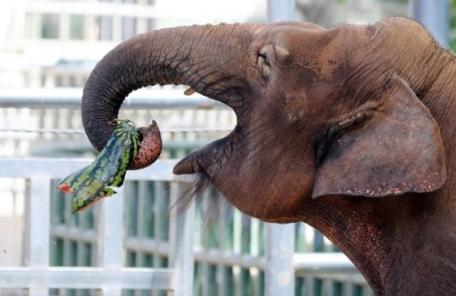전주동물원 상징 코끼리 '코돌이' 안타까운 죽음