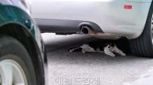 [헤럴드포토] '무더위에 지친 고양이'