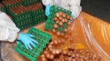유통불가 '살충제 계란' 13개 농가서 추가 검출…총 45곳으로 늘어