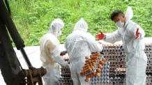 [살충제 계란 쇼크]밀집사육 원인…친환경 동물복지농장 확대 시급