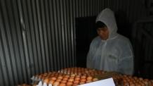 [살충제 계란 쇼크]못 믿을 친환경인증…64개 민간인증기관 통폐합