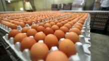 살충제 계란 어디에 풀렸나보니…모닝빵, 훈제란으로 사용