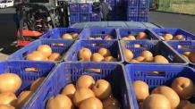 농협, 2017년산 저장배 수매로 수급안정에 나서
