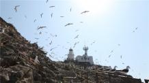 (일/생)(1200) 괭이갈매기 천국 홍도…철새들의 휴식처로 거듭나다