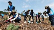 온실가스 줄이기 위해 축구장 35개 규모 숲 만든다