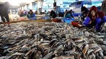 금값 오징어 더 비싸지나…내년 어획량 33% 줄어든다